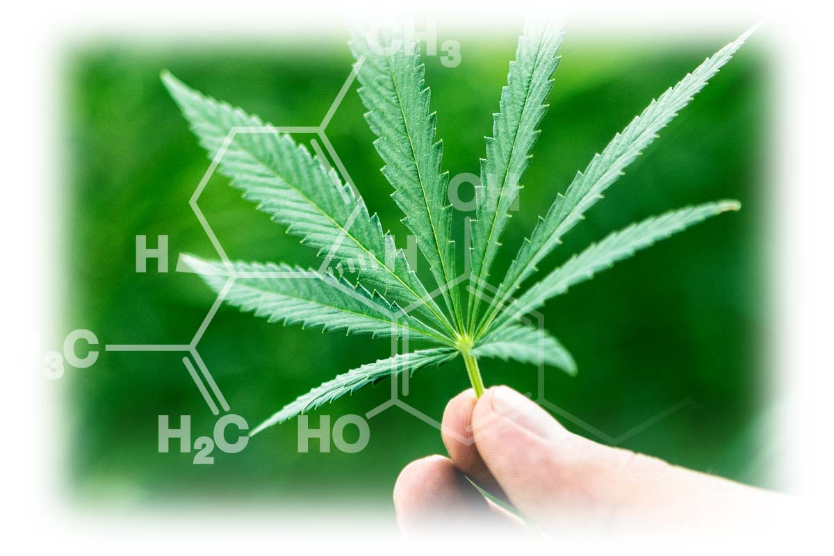 What is CBD Oil Canada